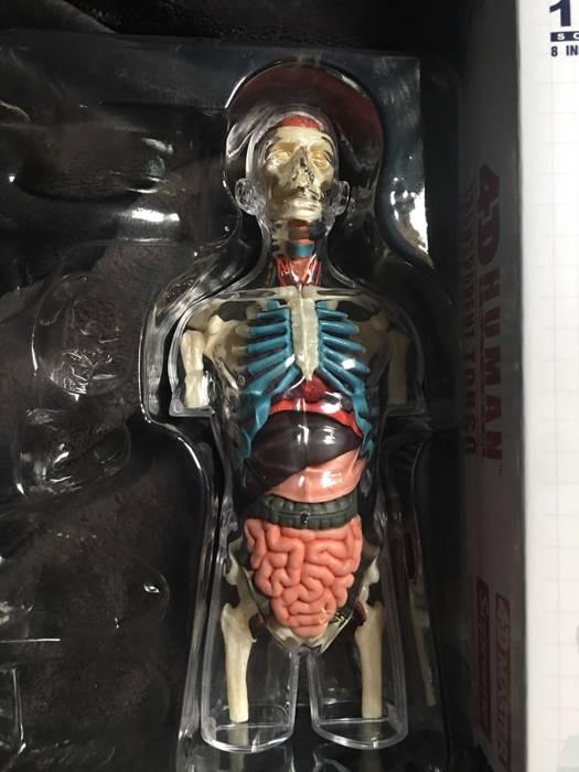 Supreme Supreme Male Anatomy Figure Size One Size Supreme For Sale