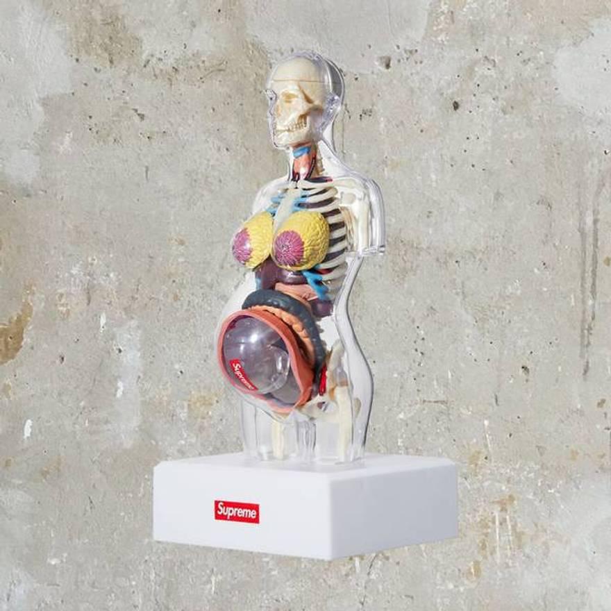 Supreme Supreme Female Anatomy Model Size One Size Supreme For