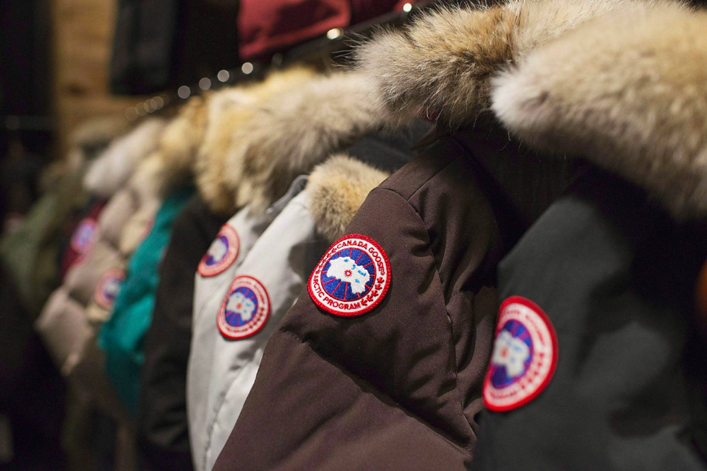 The Flight of Canada Goose