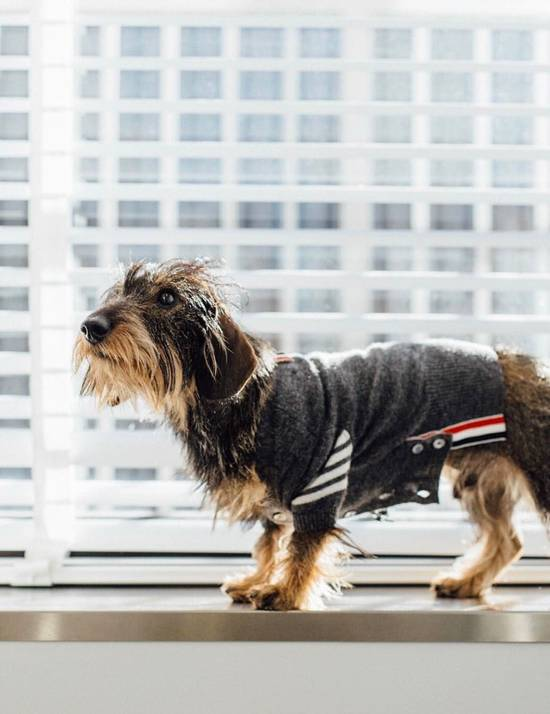 Thom Browne Hector Rib Knit Cashmere Dog Sweater Size ONE SIZE - 4